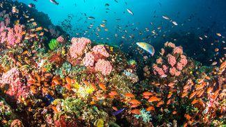 World's Best: Beginner Dive Locations