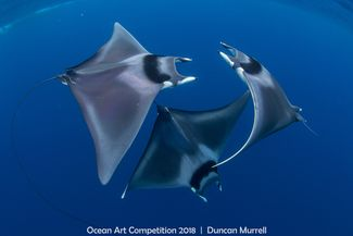 7th Annual Ocean Art Underwater Photo Contest Winners Announced