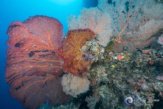 Five Reasons to Dive the Solomon Islands