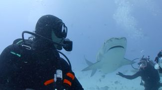 Will Smith Dives at Tiger Beach to Overcome Fear of Sharks