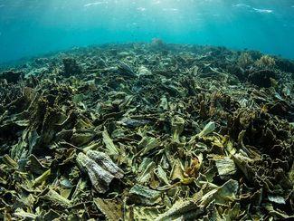 Coral reef in Komodo National Park, Indonesia