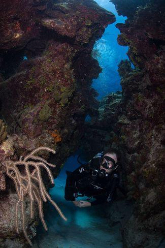 little cayman diver