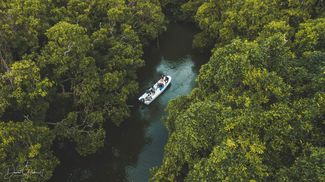 Pacific Blue Foundation Mangrove Mapping