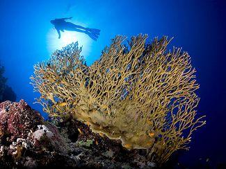 coral scrape