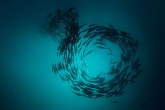 cabo san lucas scuba diving