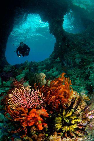 Raja Ampat underwater photography