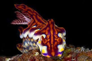 scuba diving komodo indonesia