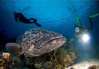 Great Barrier Reef, Australia scuba diving