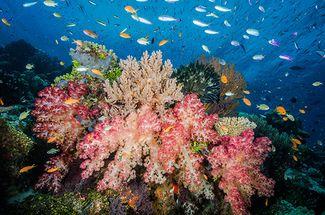 scuba diving Carl's Ultimate, Eastern Fields, Papua New Guinea