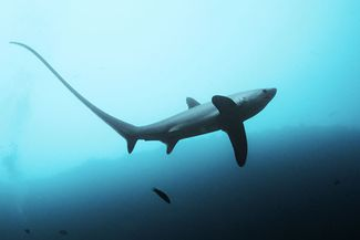 scuba diving malapascua philippines
