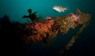 scuba diving new zealand