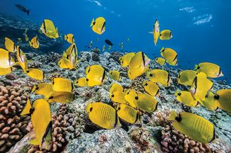 Top 3 Snorkel Spots in Kauai