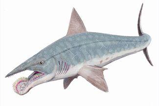 Shark Discovery: 5 Prehistoric Sharks   Sport Diver