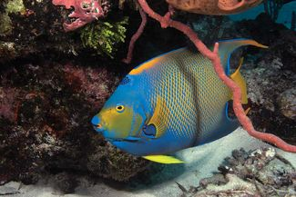 scuba diving bahamas exuma cayes