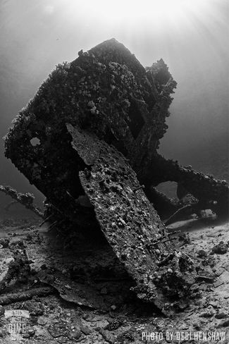 Carnatic - Red Sea