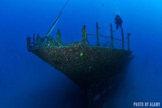 Sea Tiger - Oahu, Hawaii
