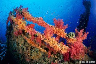 Numidia and Aida - Red Sea