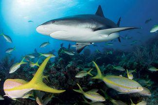 best beginner scuba diving