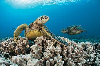 best scuba diving destinations for beginners
