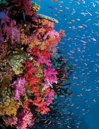 10 Reasons To Scuba Dive Fiji