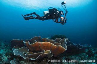 wakatobi scuba diving disc coral