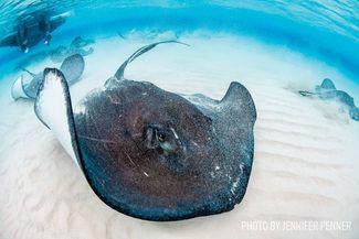 stingray scuba diving grand cayman
