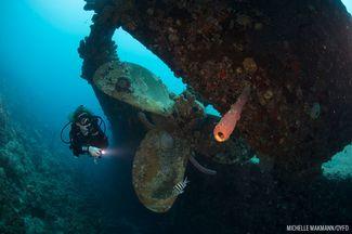 Scuba Diving Bonaire Wreck