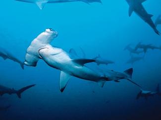 50 Best Dives