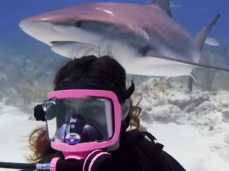 scuba diving sharks ellen show video