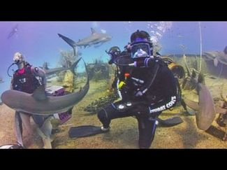 jesse palmer dive sharks good morning america bahamas