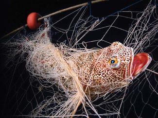 fish caught fishing net