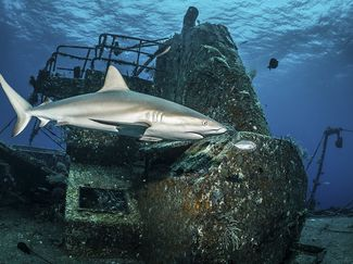 scuba diving wrecks bahamas