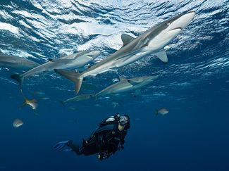 Scuba diving gear for adventurous thrill-seeking scuba divers sharks