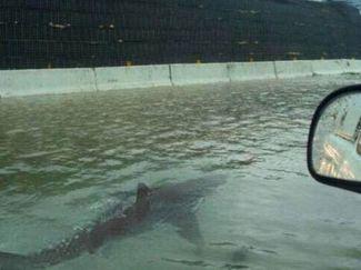 Twitter shark during Hurricane Irma