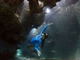 photo contest sport diver