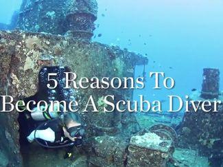 scuba diver certification