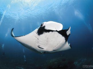 scuba diving experience rankings