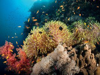 Daedalus Reef Red Sea Egypt