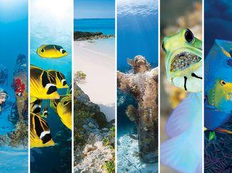 Scuba Destinations Perfect for the Beginner Diver