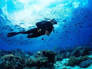 undersea scuba diver