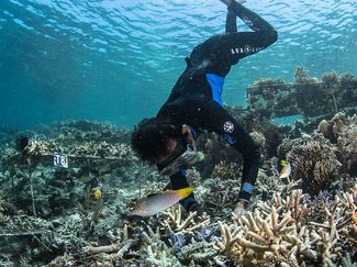 coral restoration indonesia