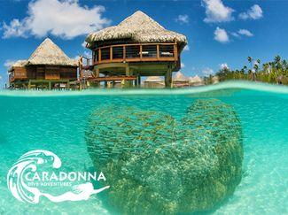 overwater bungalow hotel