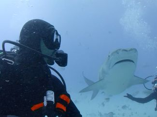 Will Smith Meets Tiger Shark