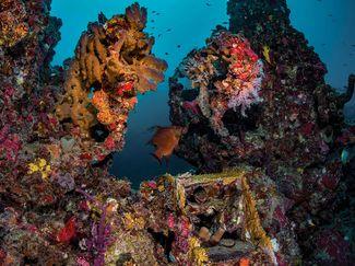 Exploring shipwreck
