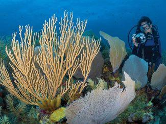 Underwater photography buoyancy skills
