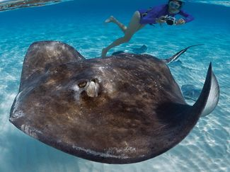 Taking a photo of a passing stingray