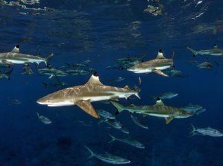 shark cancer