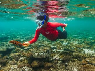 Crown of Thorns Starfish Removal