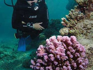 Best compact camera for scuba diving