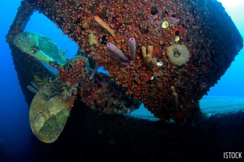 Shipwrecks With Strange and Sordid Pasts | Sport Diver